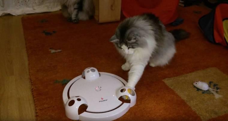 frolicat-cat