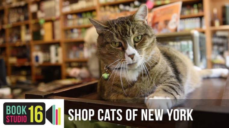 shop-cats-of-new-york-5