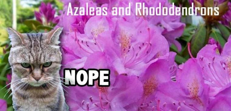 2-rhododendrun
