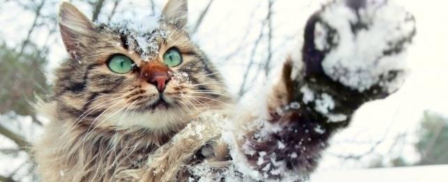 cat-paw-snow