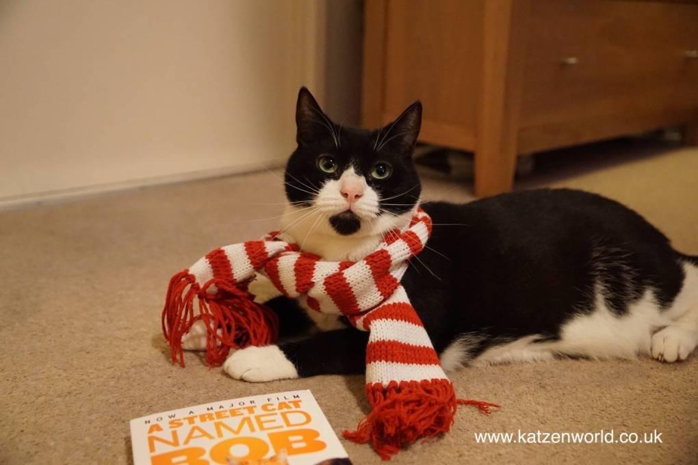 4e8b0c6fc7c A Street Cat Named... - Katzenworld