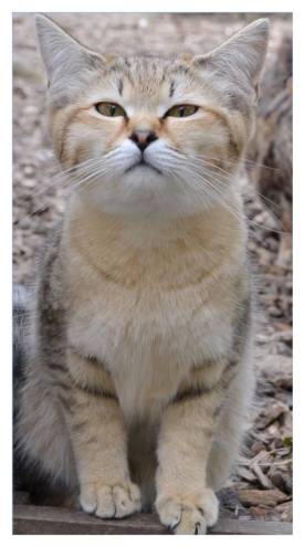 Premier Site For Cat Breeds