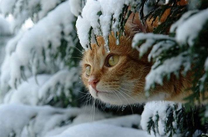 winter-cat