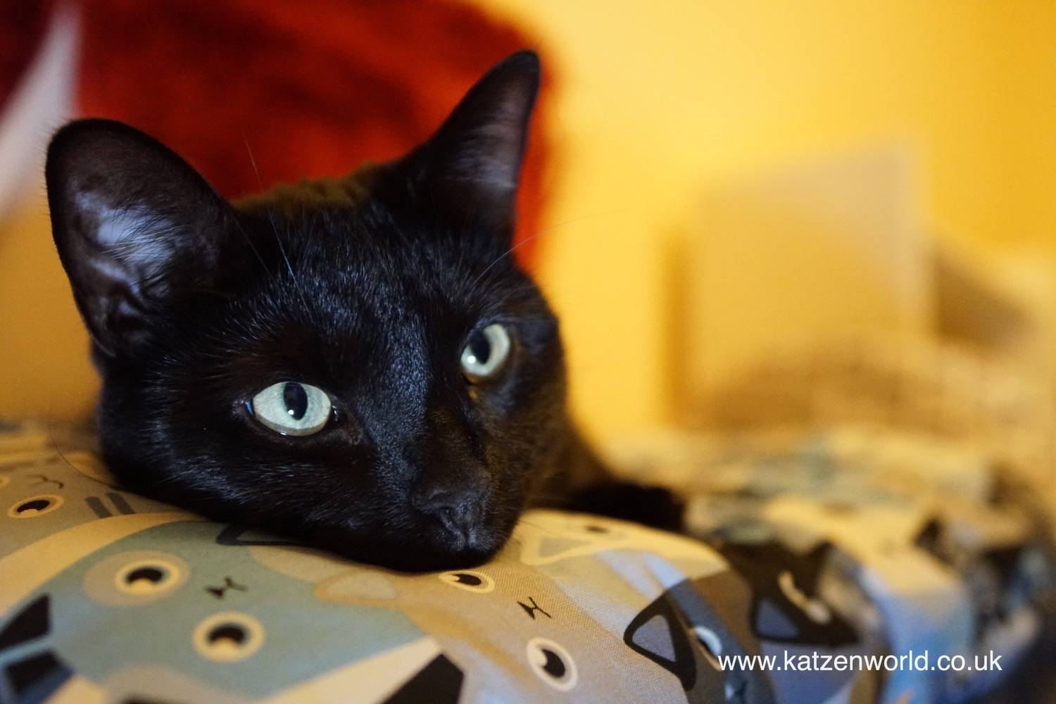 Nubia: So… Oliver Thought This is his new Hiding Place? Think again…