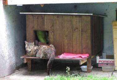Outdoor-wooden-houses-for-homeless-cats-in-Riga-58b53f647b246__700