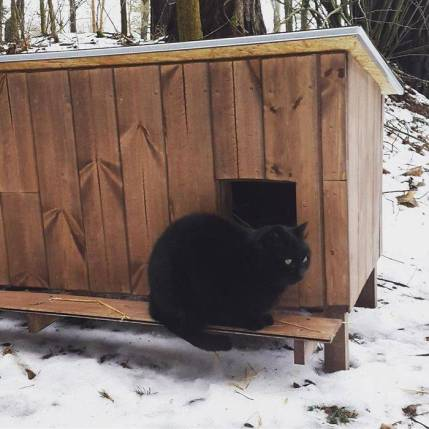Outdoor-wooden-houses-for-homeless-cats-in-Riga-58b6946145f9e__700