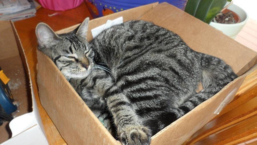 Purrsday Poetry: The Sage sleeps in a Box