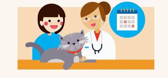 Healthy From Head to Tail: When to Visit the Vet