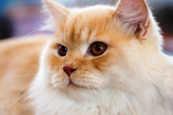 Sunburn Advice Issued To Cat Owners As Soaring Temperatures Put Cats At Risk Of Skin Cancer Katzenworld
