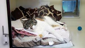 Cat laying comfortably in his bed © RSPCA