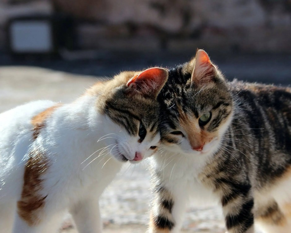 cat and kitten playing or fighting