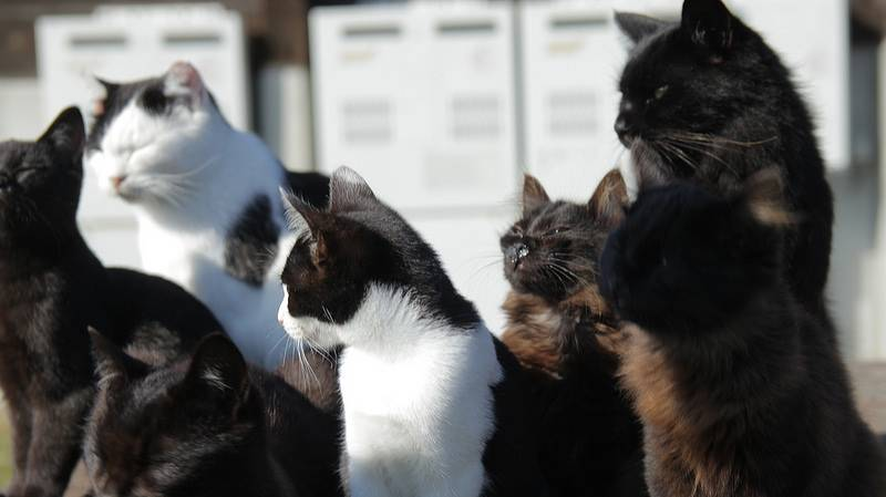 Tashirojima, The Cat Island of Miyagi Prefecture