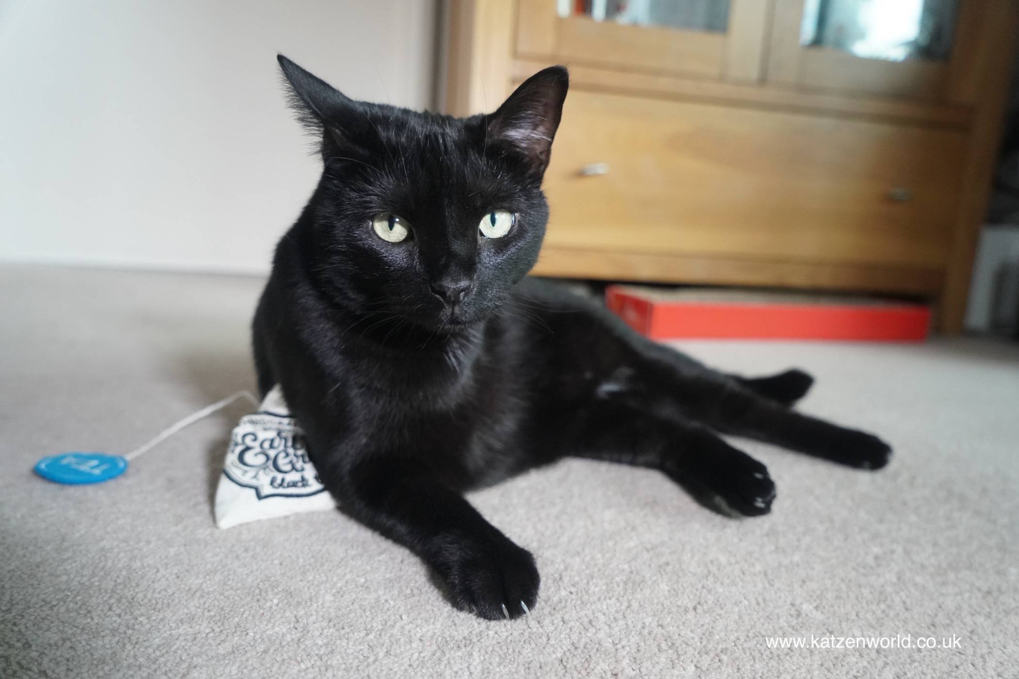 """Teatime"" with Nubia and the Natural Pet Box"