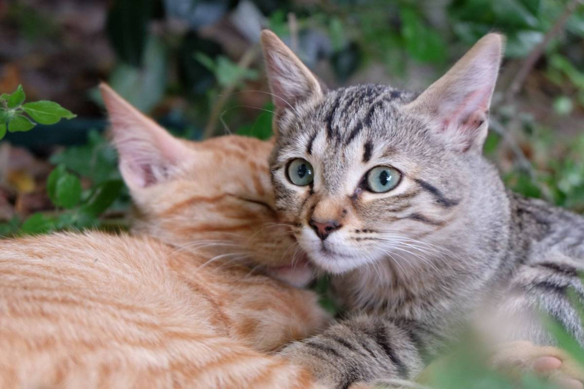 Feline Facts - Debunking 5 Common Myths