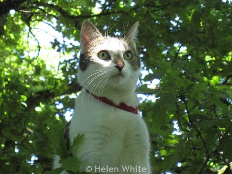 Bobby on a tree.