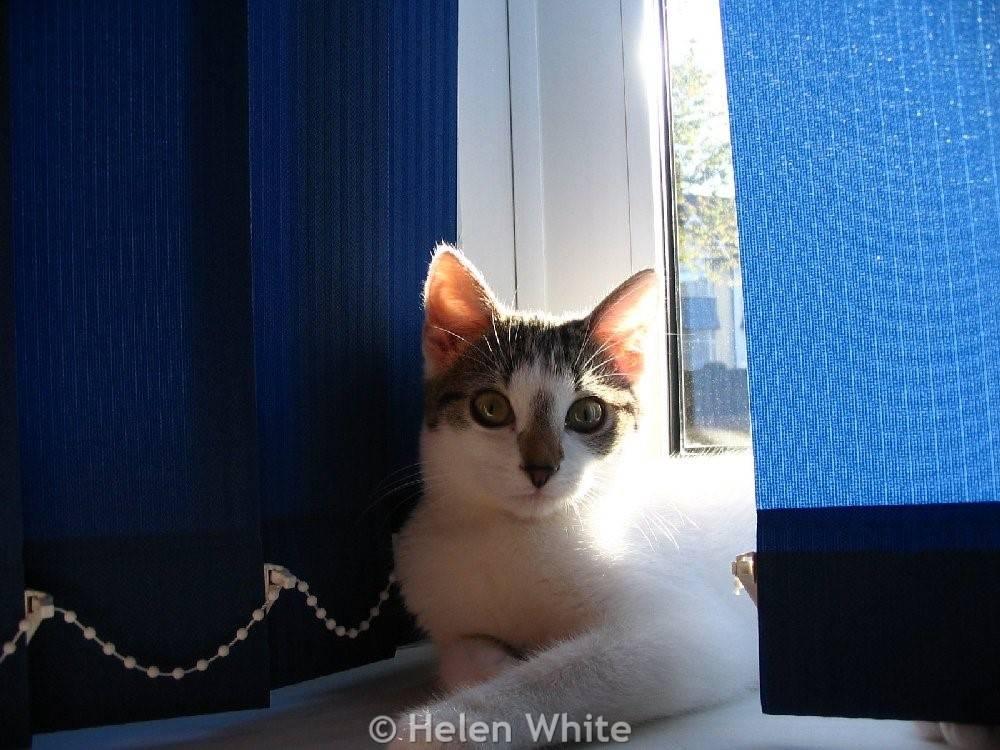 Bobby as a kitten