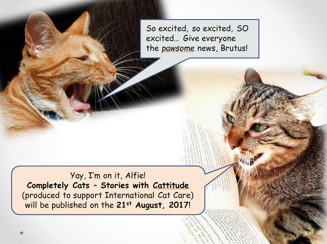 Pawsome News! Completely Cats – Stories with Cattitude launch date is now set