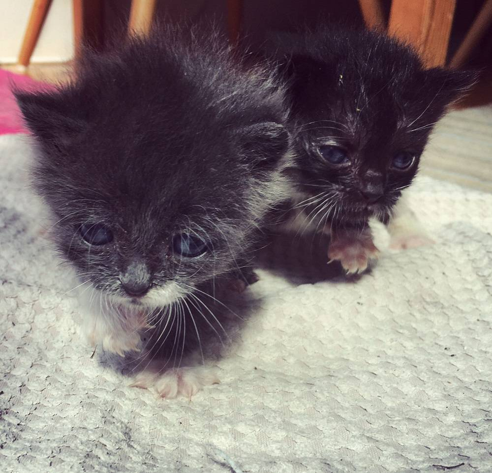 10-Day-Old Kittens Found in Bin Bag