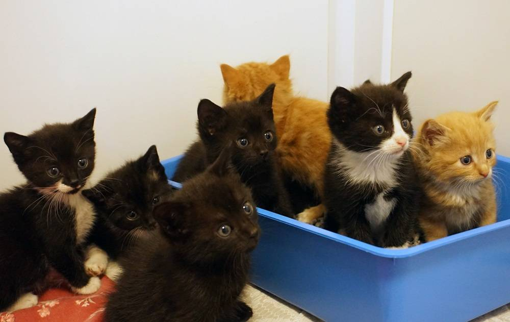 Two Rescue Cat Mums Raise Their Eight Kittens Together