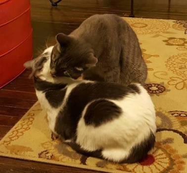 Mutual Grooming