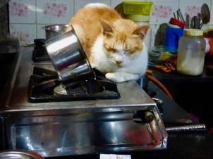 cat on the stove 3