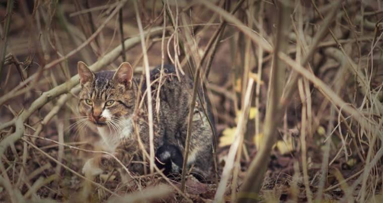 wild domestic cats