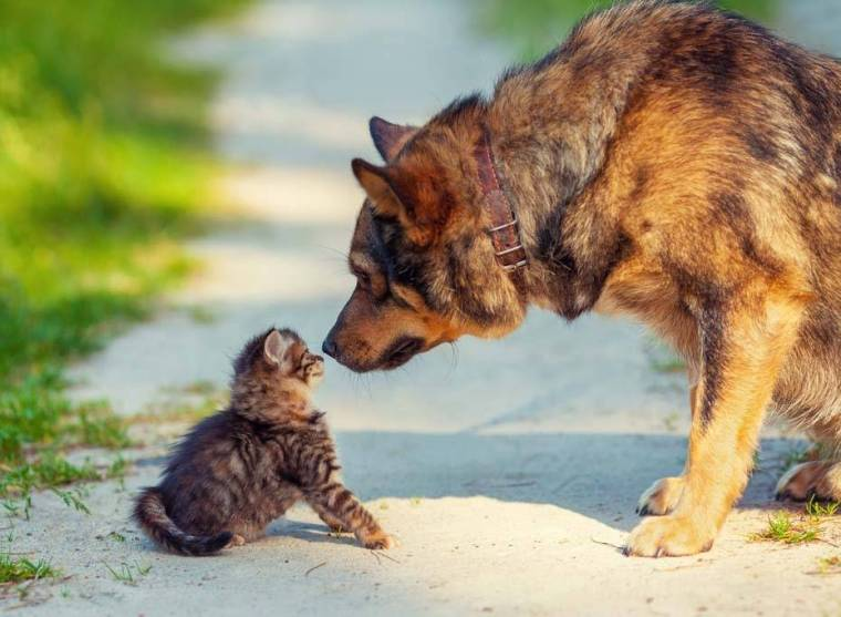 Big dog and little kitten