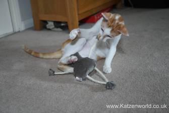 4cats monkey0011