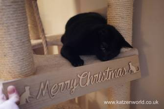 Christmas presents Secret Paw0025