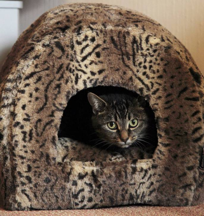 Copy of RSPCA Luxury Leopard Plush Igloo Cat Bed - 2