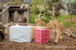 Katzenworld Lion Cubs0002