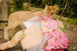 Katzenworld Lion Cubs0006