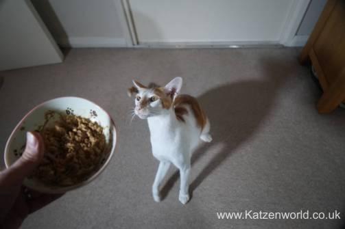 Oliver & Renegade cat food0012
