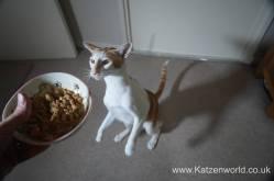 Oliver & Renegade cat food0014