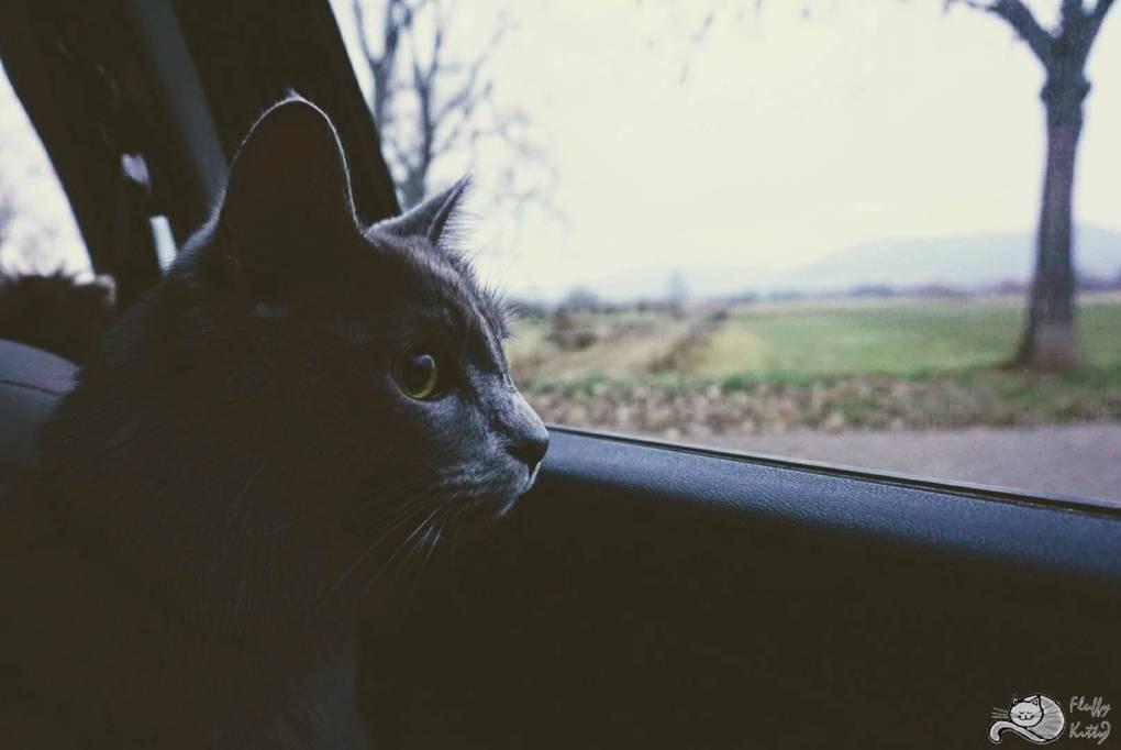 Yoda Car | Fluffy Kitty