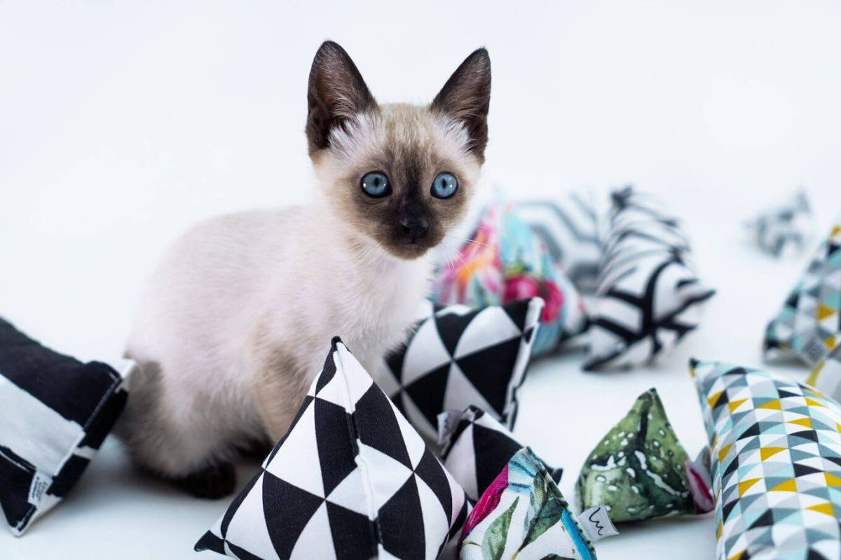 Help us make these cat toys reality: Minoumi - Designed Cat Toys Kickstarter campaign