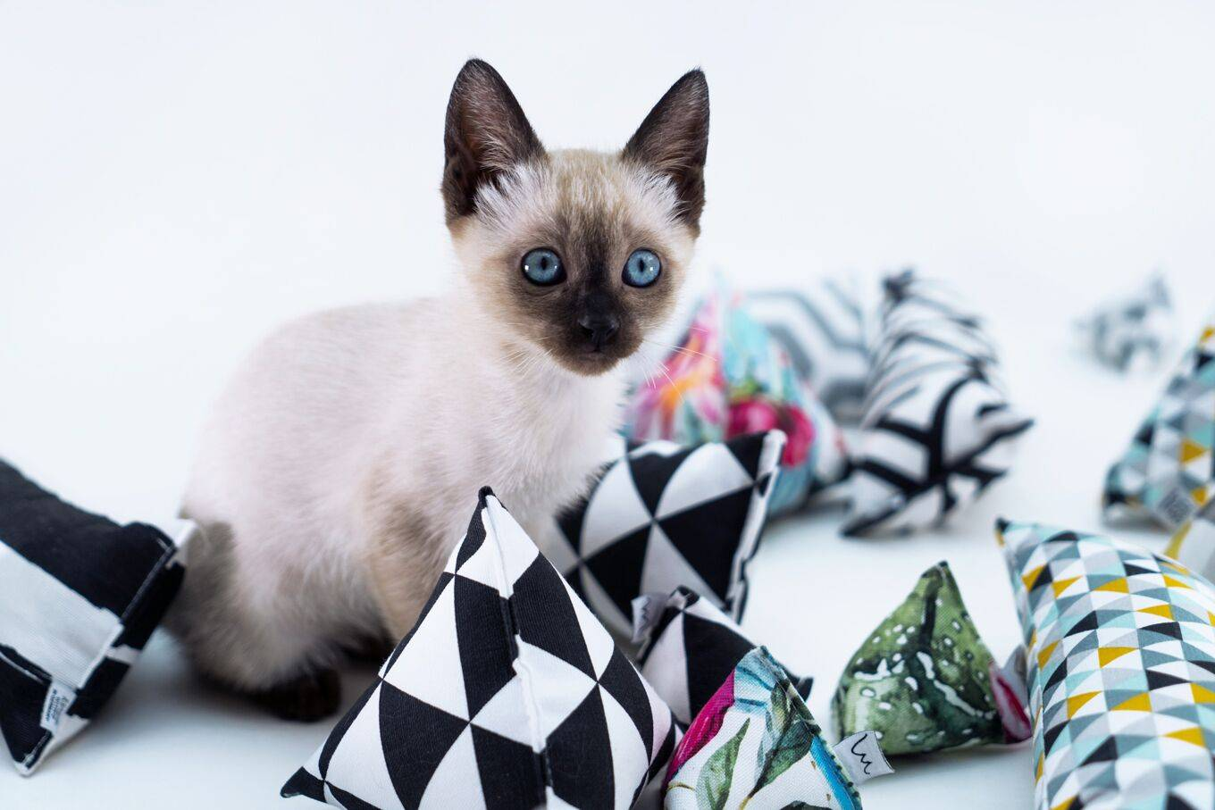 Help us make these cat toys reality: Minoumi – Designed Cat Toys Kickstarter campaign