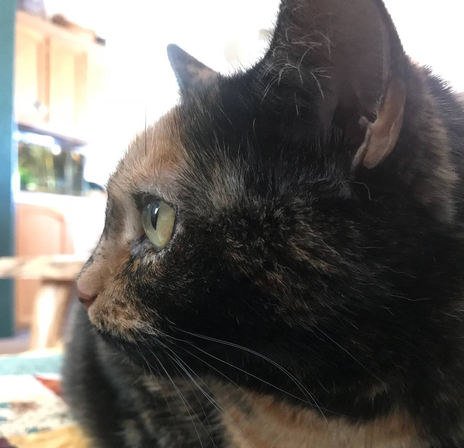 A Dream Come True – Thanks to Tortie