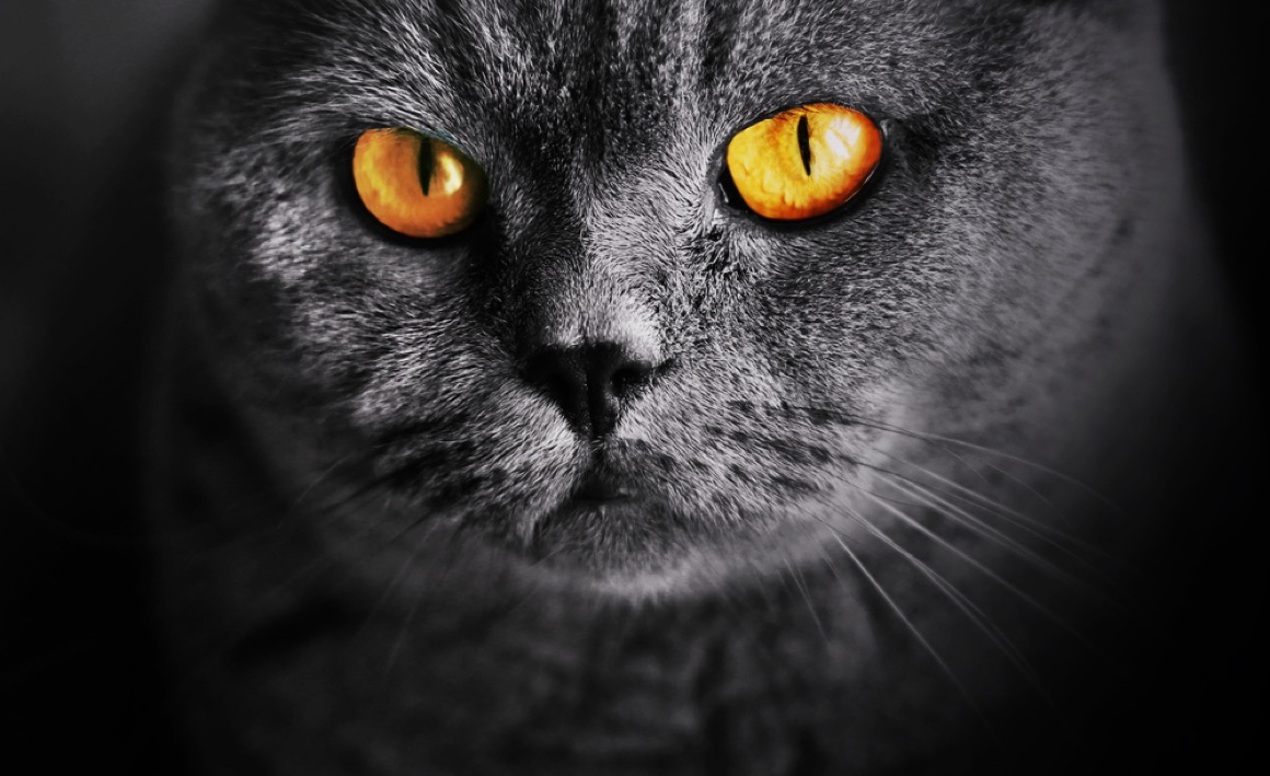 Our Cat's Unique Eyesight: Questions, Answers & Common Myths Debunked