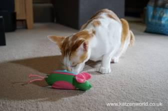 Katzenworld bowless feeder0013