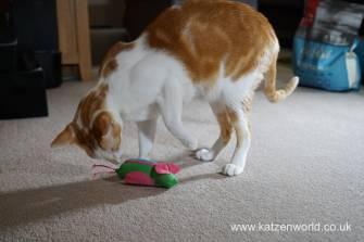 Katzenworld bowless feeder0017