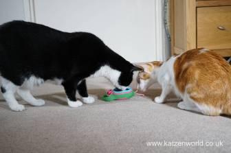 Katzenworld bowless feeder0025