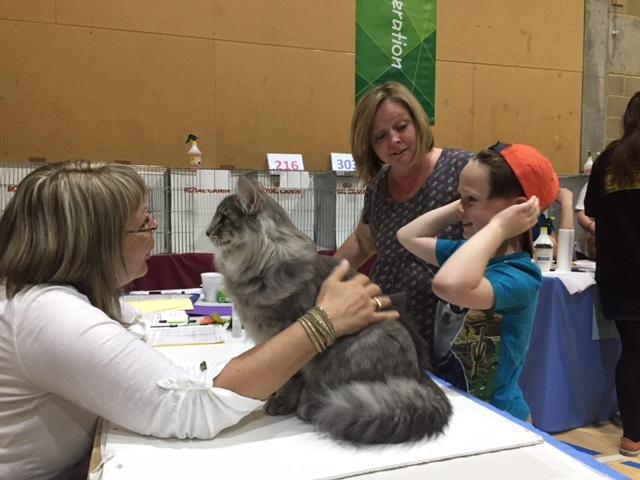 Frolicking Fun Felines at the Felis Britannica International
