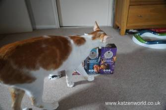 Feline Cuisine Katzenworld0002