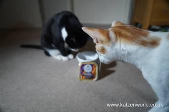 Feline Cuisine Katzenworld0006