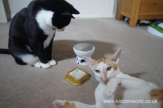 Feline Cuisine Katzenworld0013