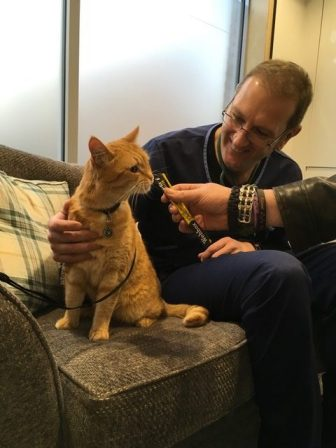 London Cat Clinic0004