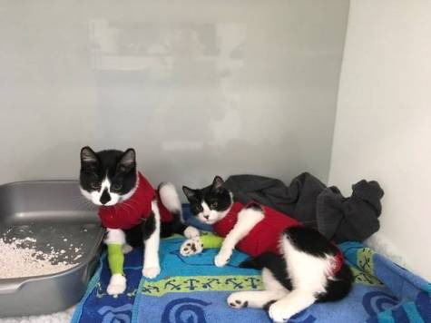 London Cat Clinic0009