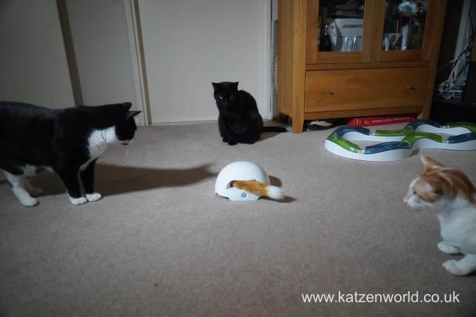 foxden Katzenworld0014