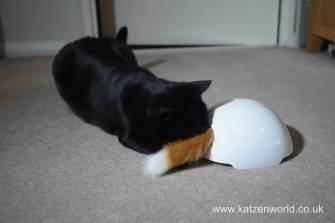 foxden Katzenworld0015